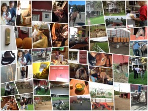 farm-stay-collage